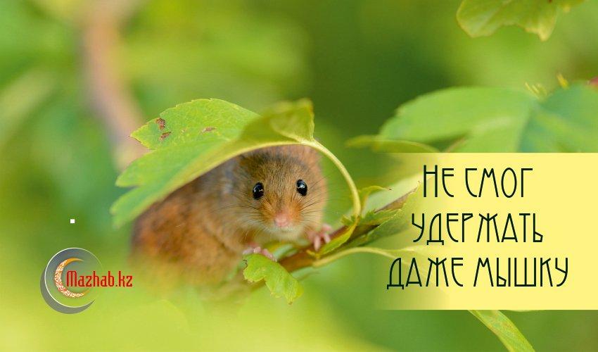 Не смог удержать даже мышку...