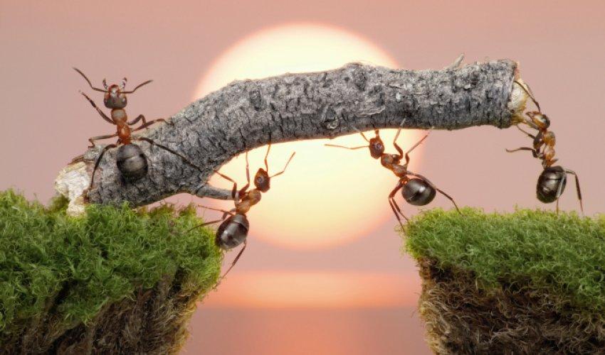 Даже муравей уповает на Бога!