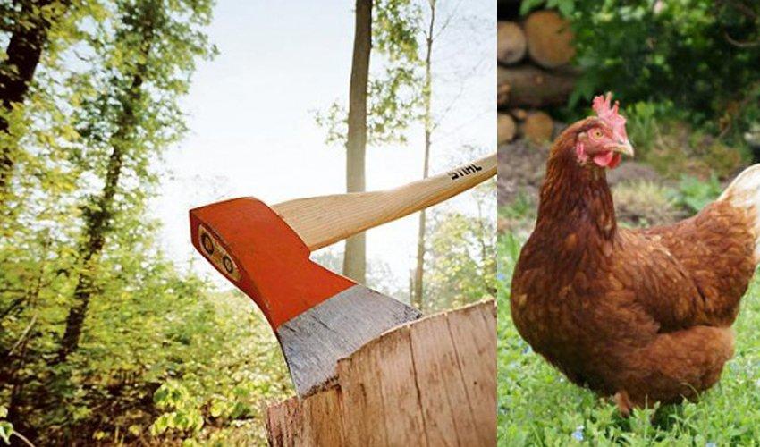 Считается ли халалом мясо курицы, зарубленной топором?