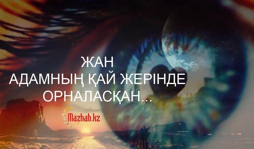 ЖАН АДАМНЫҢ ҚАЙ ЖЕРІНДЕ ОРНАЛАСҚАН...